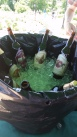 Plenty of ice cold brews and ciders at Ninety9 Bottles Craft Beer Fest 2014
